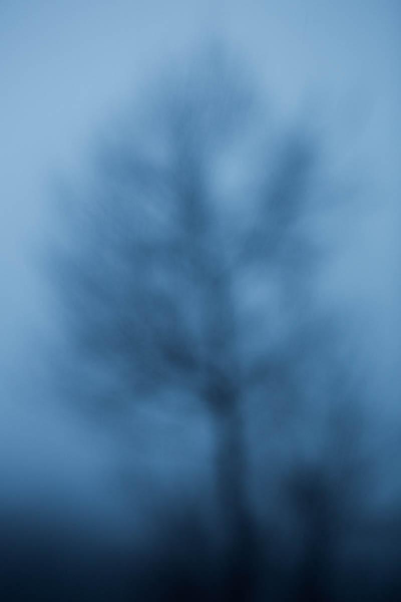 "Silhouette I - Bare silhouettes I Srebrenica, March 2013 - Copyright © © S. Borcard - N. Metraux - Bajramovići - Republika Srpska - Bosnie-Herzégovine - <A href=""https://maps.google.com/?ll=44.104428,19.278875&z=16"" target=""_blank"">(Map Silhouette I)</A>"
