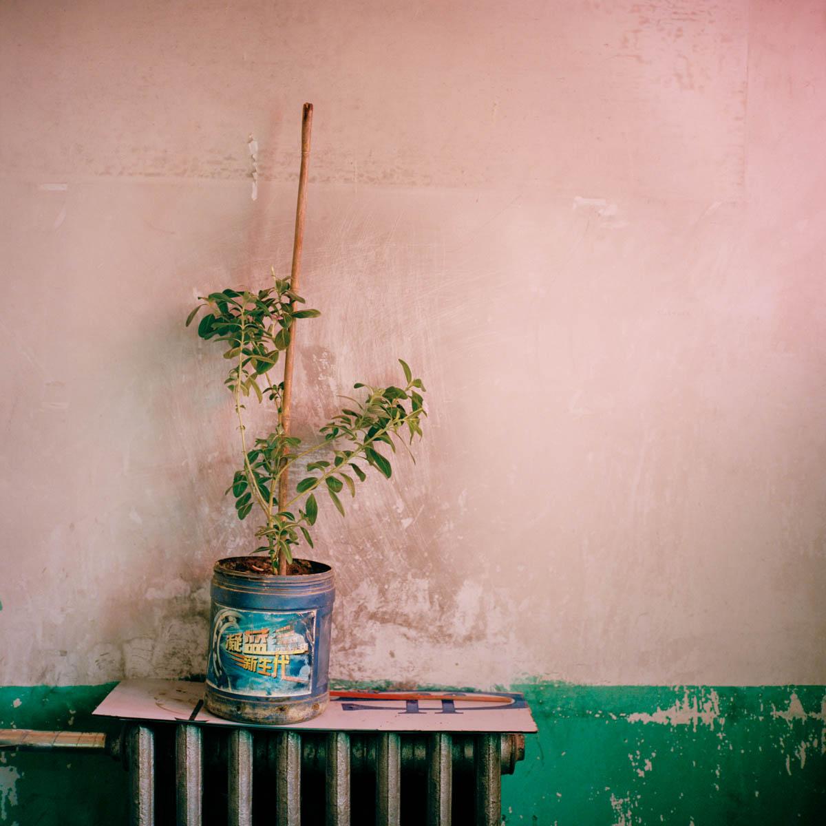"""""""Plant"""