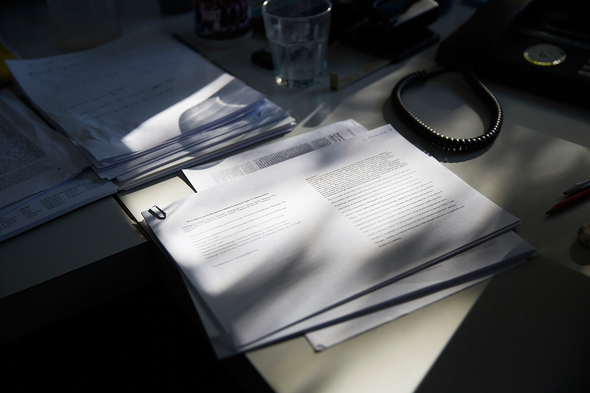Shadows on research papers on a late of autumn afternoon. Vetsuisse Faculty, University of Zürich, October 2018